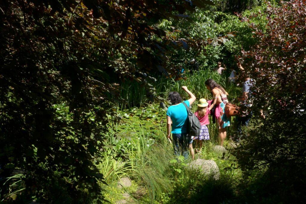 Gulbenkian Dia da Terra - Importância das Plantas