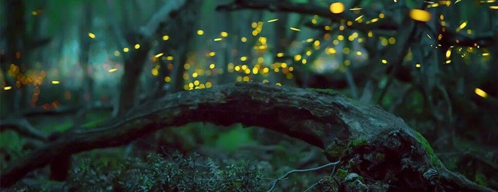 Noite de Pirilampos