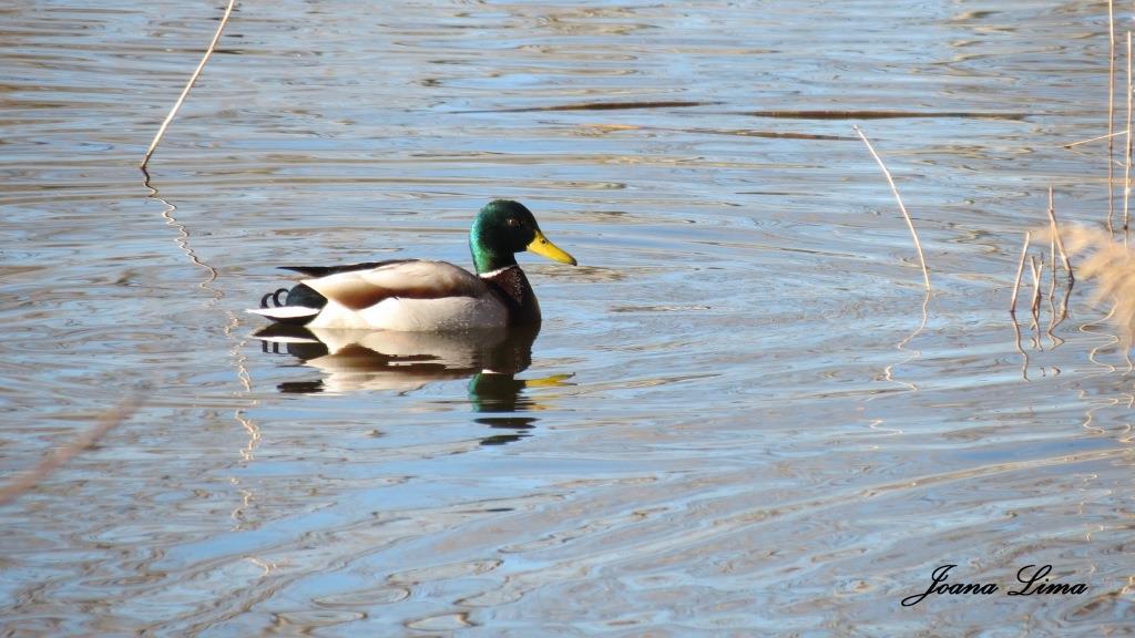 Passeio na Natureza: A Lagoa de Mira