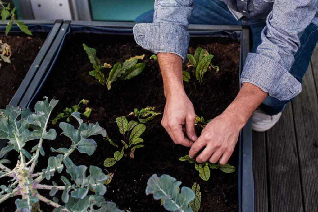 Hortas Urbanas para todos
