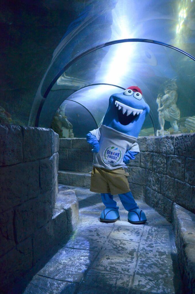 Festival de Verão Sharky