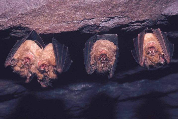morcegos serra da arrábida