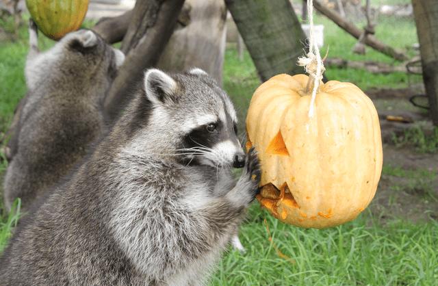 Jardim Zoológico celebra o Halloween