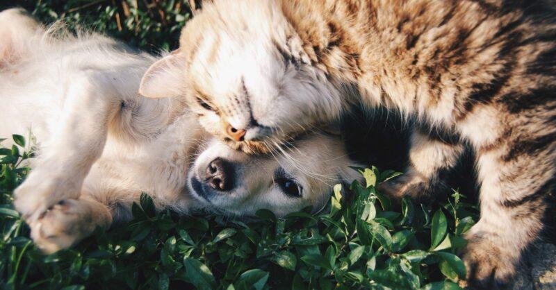 Ordem dos Médicos Veterinários assinala o Dia Mundial do Animal
