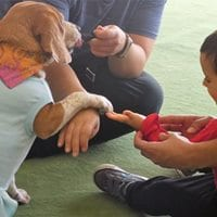 Sessão natalícia de ginástica e interação com cães no Porto