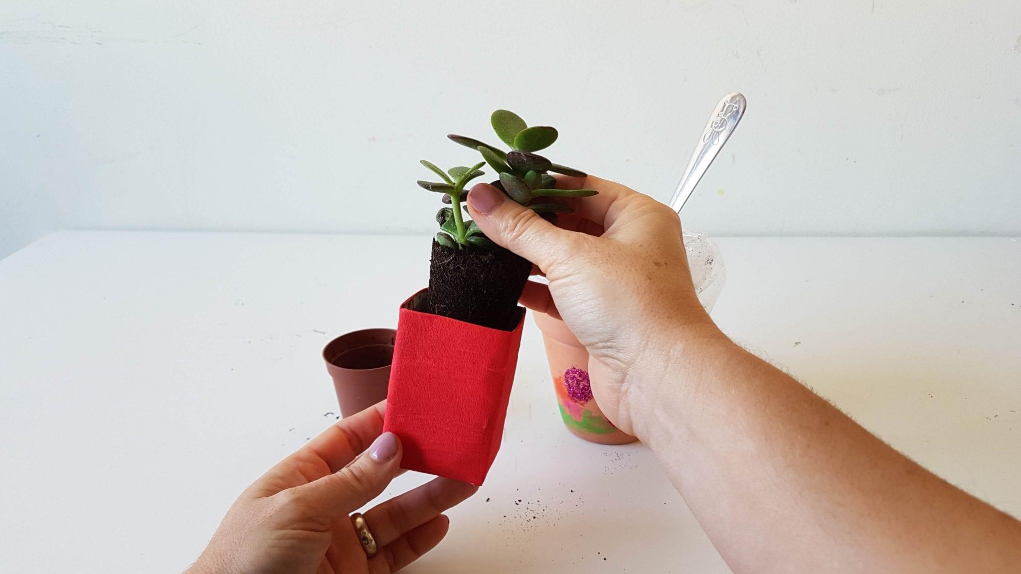 prenda para professores mimosa plantar 2