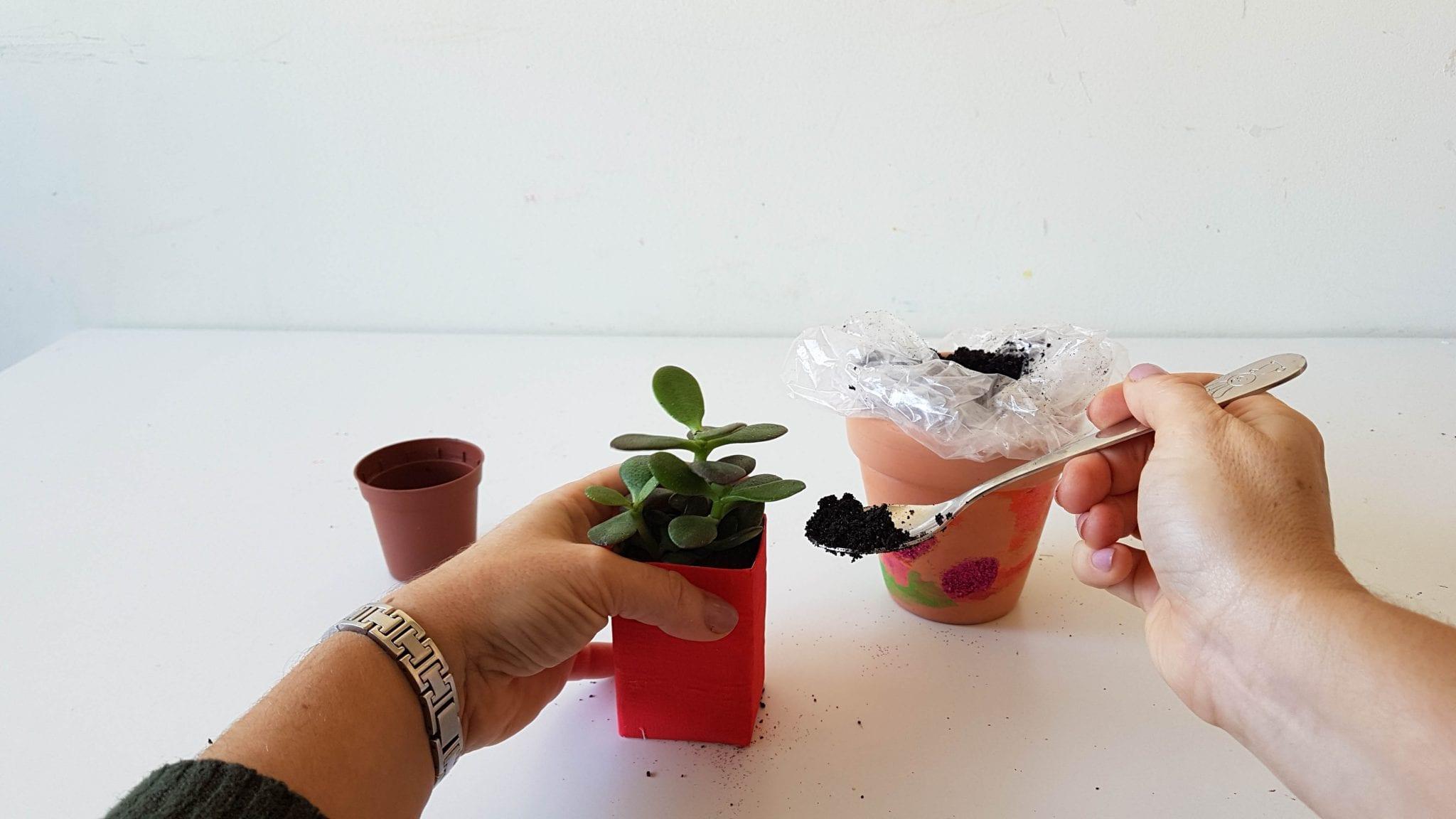 prenda para professores mimosa plantar 3