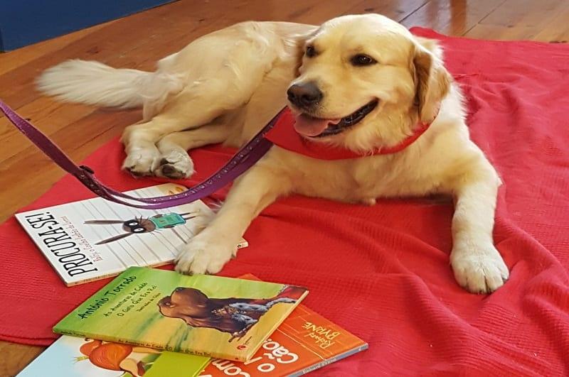 Sábados Cães&Livros