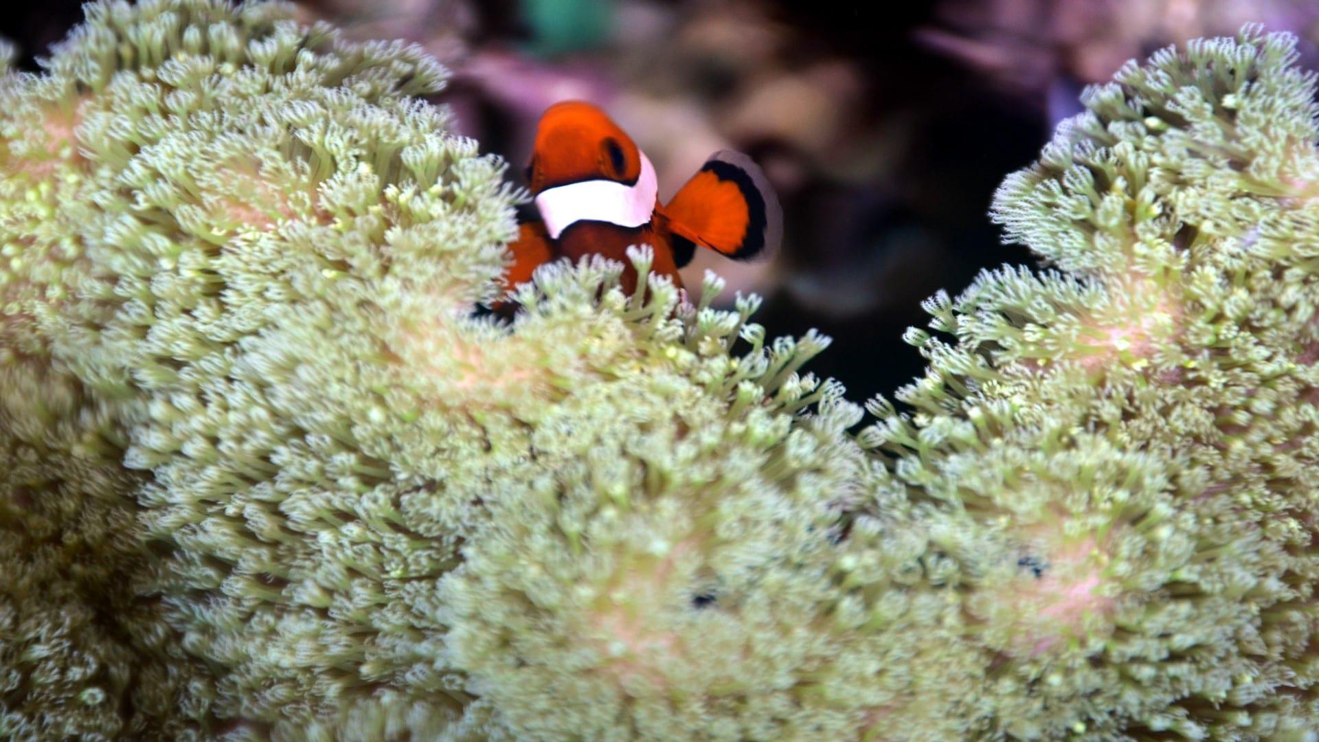 Fauna Marinha tropical
