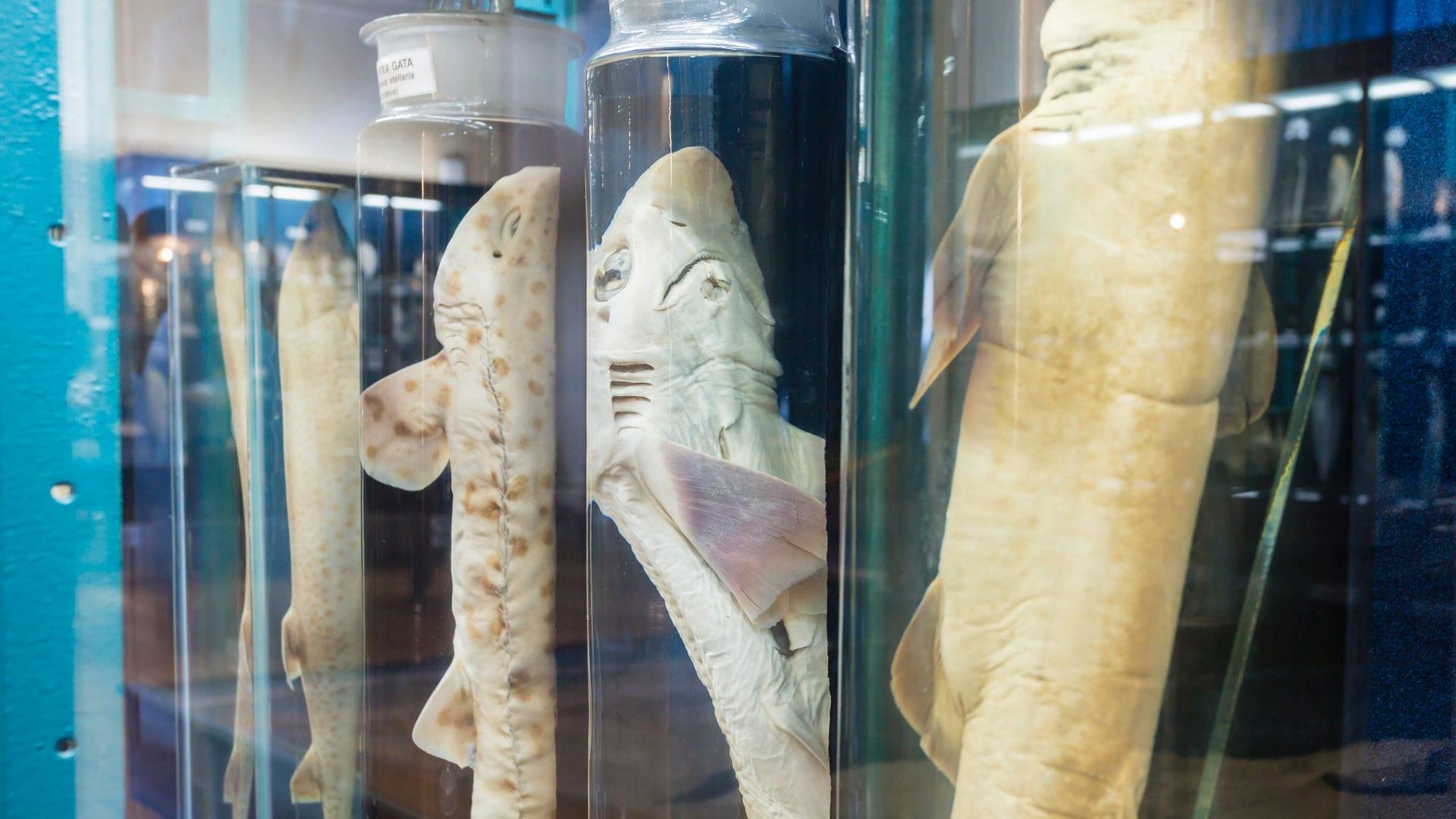 colecção do Rei aquário vasco da gama