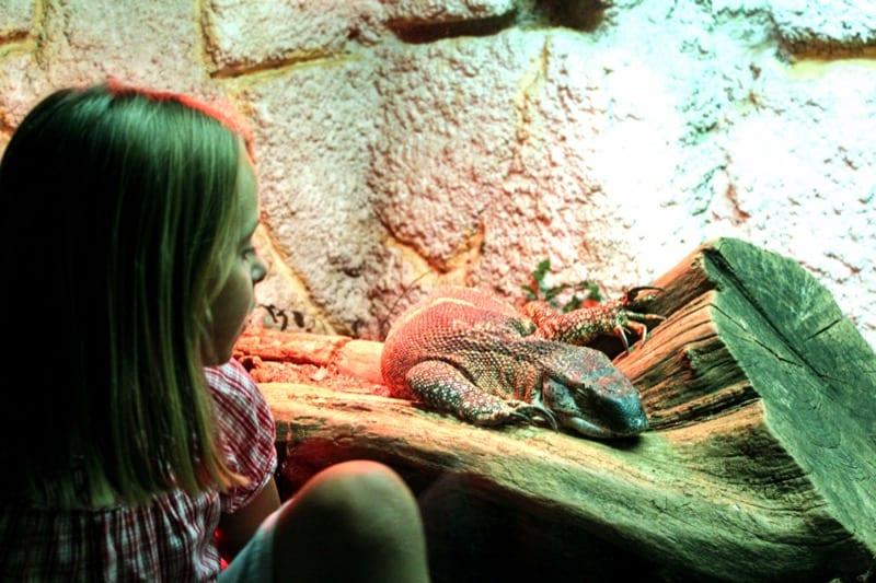 reptilário zoo santo inácio