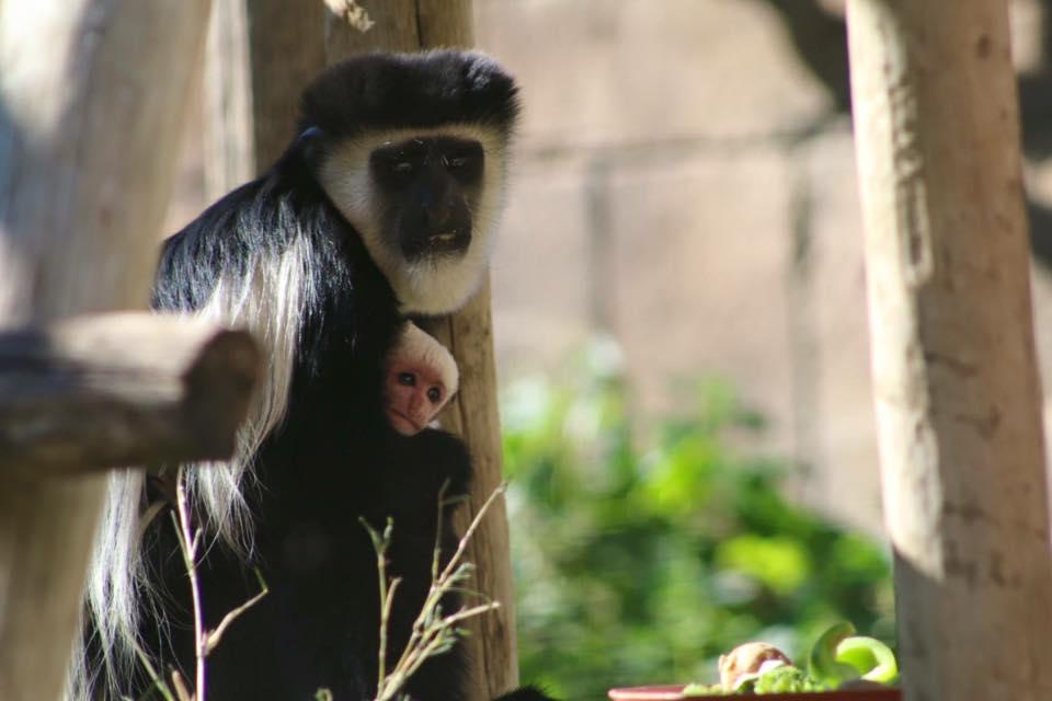 zoo de lagos macacos