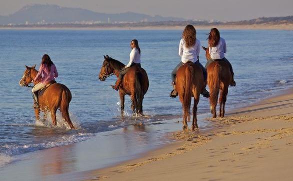 o que visitar na comporta - cavalos comporta