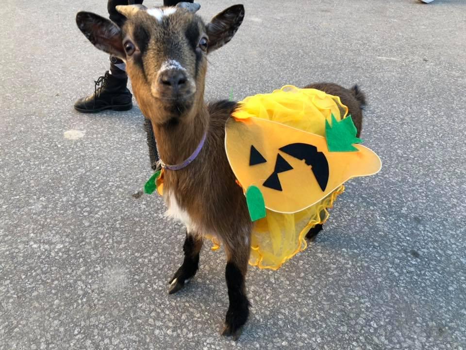 cabrinha halloween quinta pedagógica santa isabel