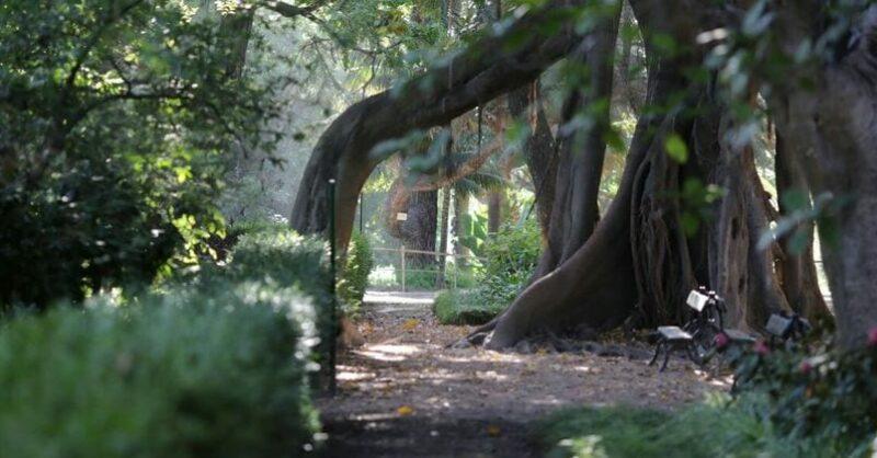 jardim botânico de lisboa