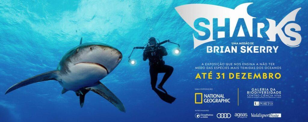 Sharks Porto