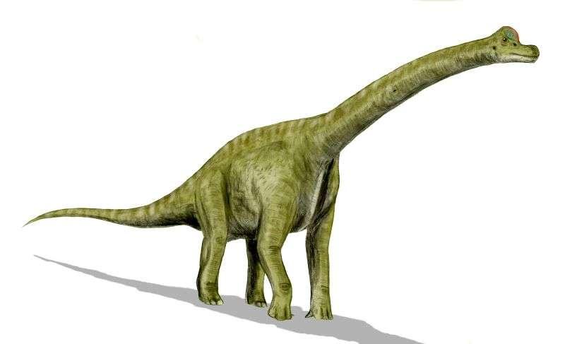 Saurópode - Pegadas de dinossauro em Portugal