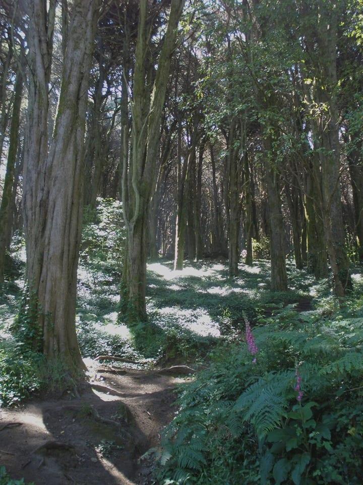Florests