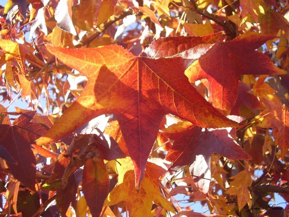 Hora da Família - Outono