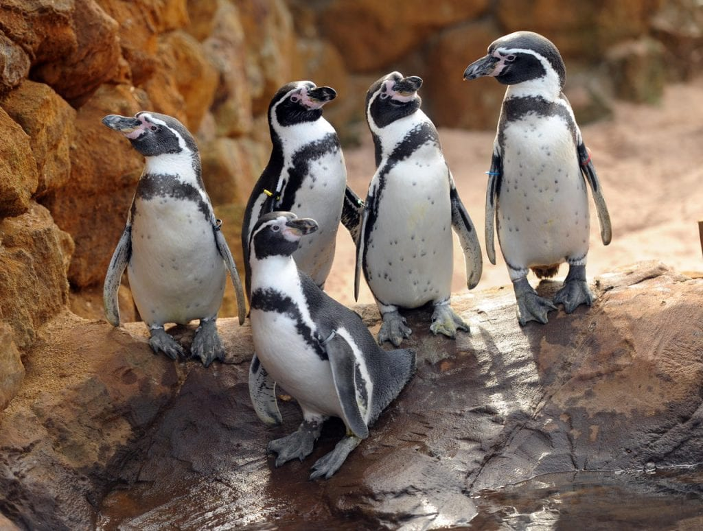 pinguins sea life