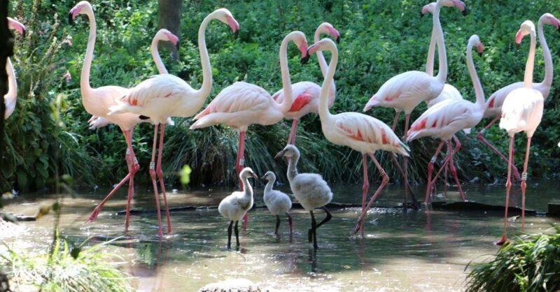 Zoo Lourosa: o único parque ornitológico do pais!