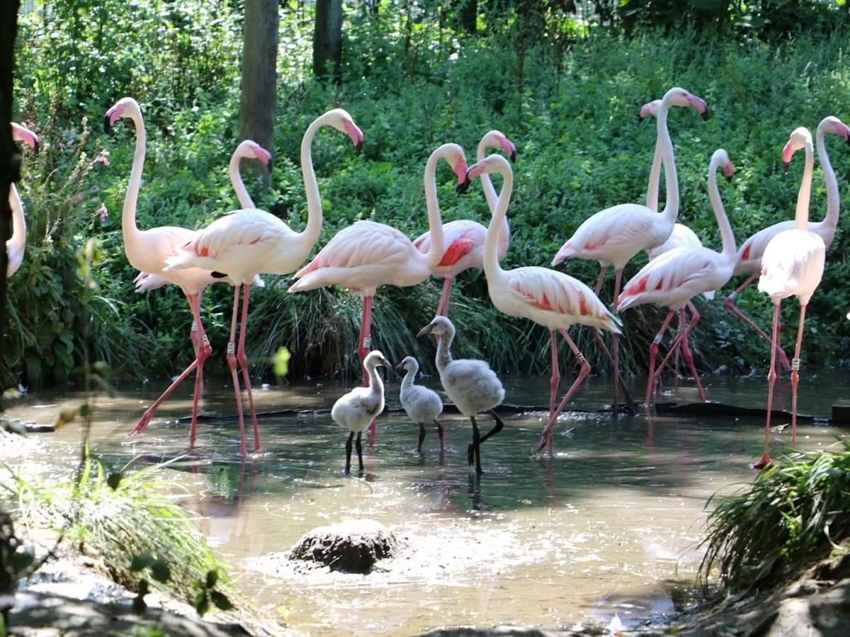 Zoo Lourosa