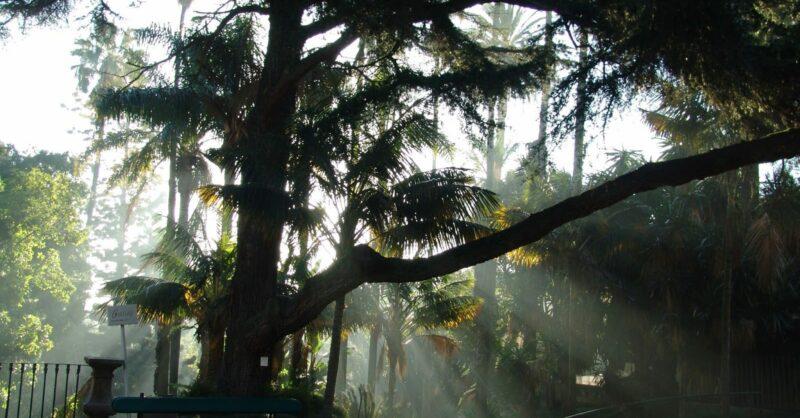 Visita-Ateliê: Do Jardim Botânico aos Quadro de São Roque