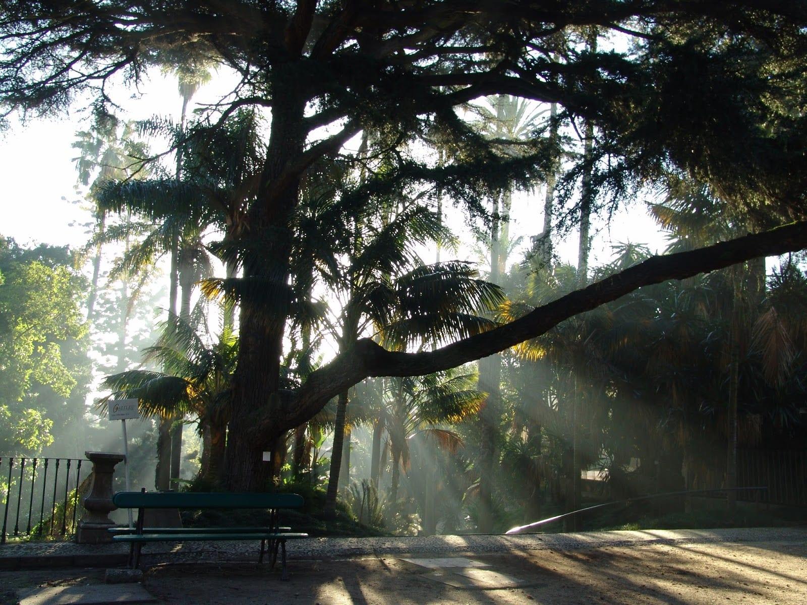 Jardim Botanico LX