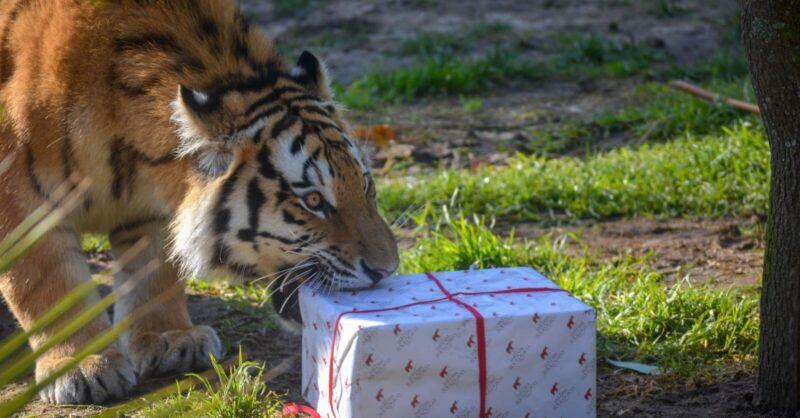 Férias de Natal no Jardim Zoológico