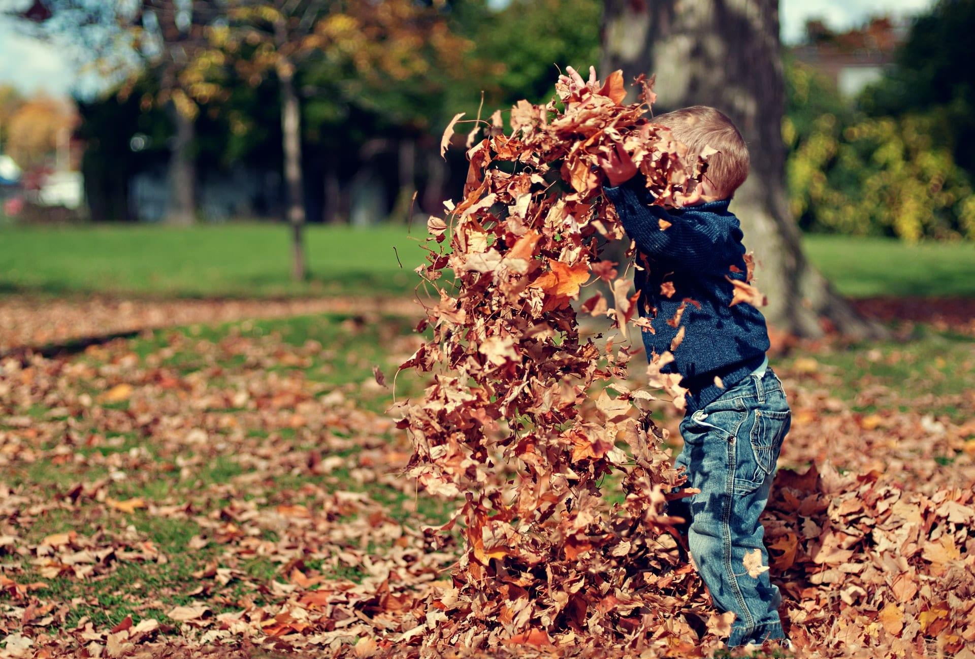 leituras e atividades outono