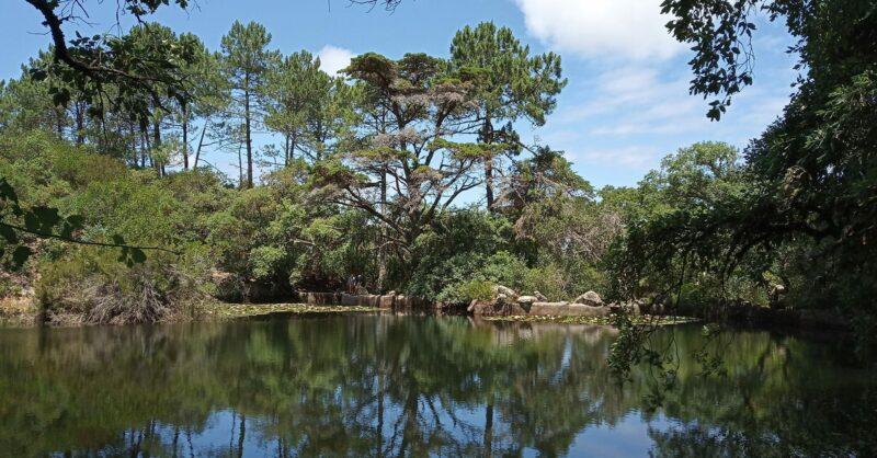 Um Poema para a Floresta