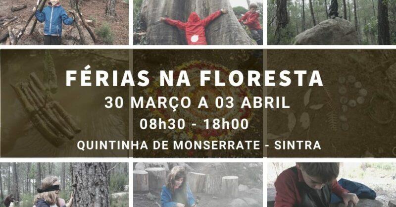 Férias da Páscoa na Floresta