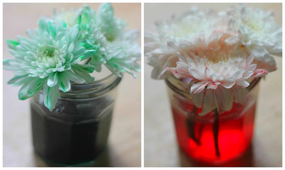 plantas mudam de cor
