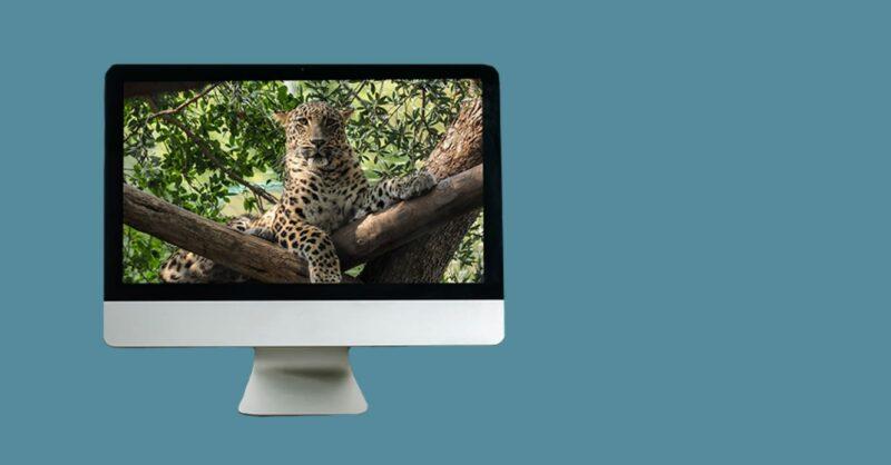 programas-educativos-novidade-zoo-banner