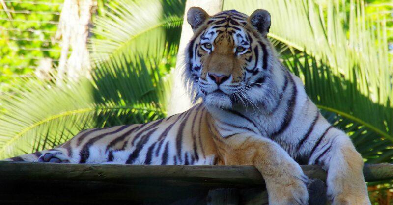 Parabéns ao Zoo – 137º Aniversário do Jardim Zoológico de Lisboa