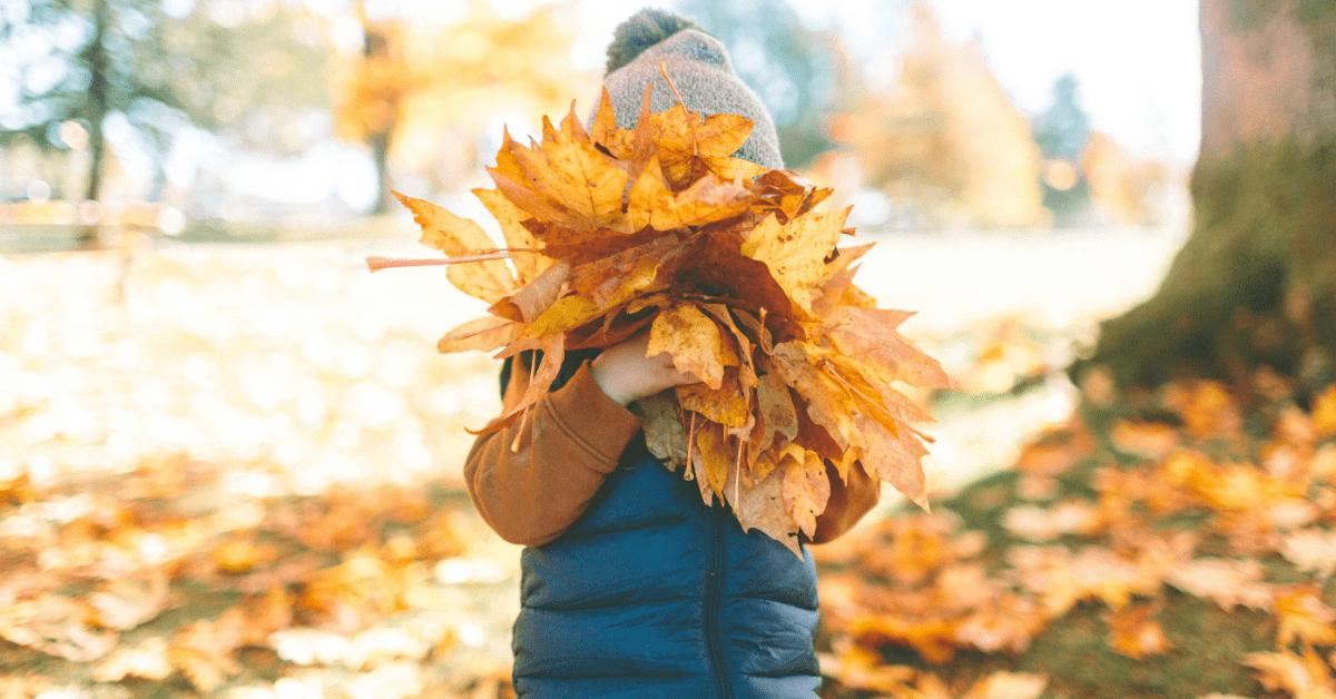 receber outono