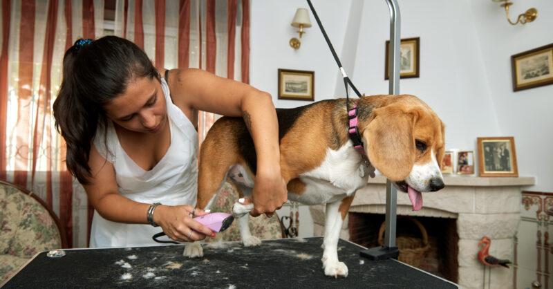 cuidados a ter com os animais no confinamento