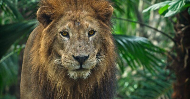 Pistas que dão prémios no Dia do Pai do Jardim Zoológico!