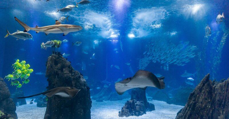 5 curiosidades e uma atividade divertida do Oceanário