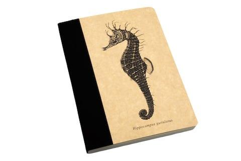 caderno oceanário