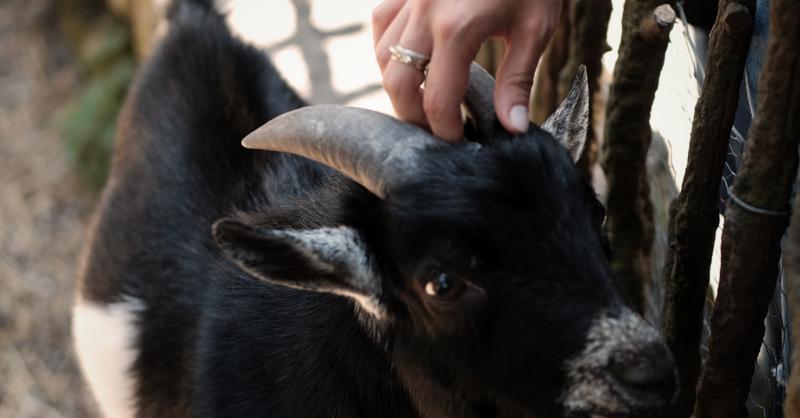 No Dia Mundial da Criança, a Aveleda tem ofertas especiais para os mais novos!