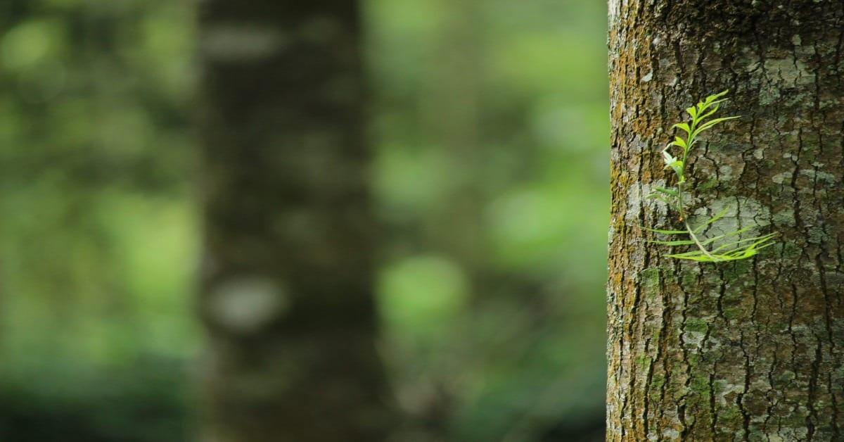À Descoberta das Árvores – Dia do Fascínio das Plantas