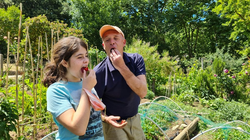 horta urbana horta em casa colher e comer os frutos